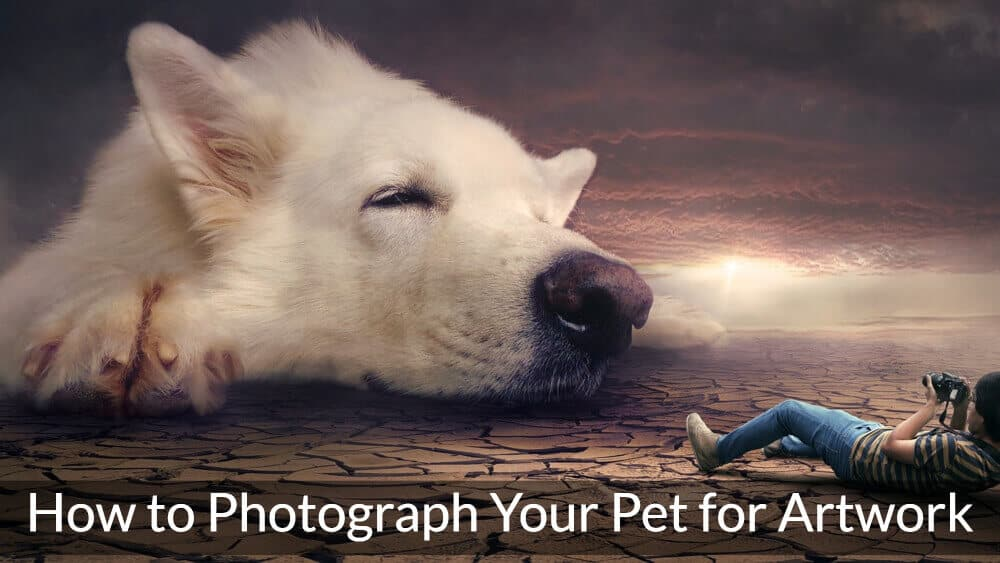 How to Photograph your Pet for Artwork